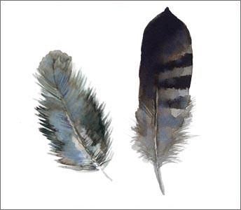 Conran + M&S / Feathers